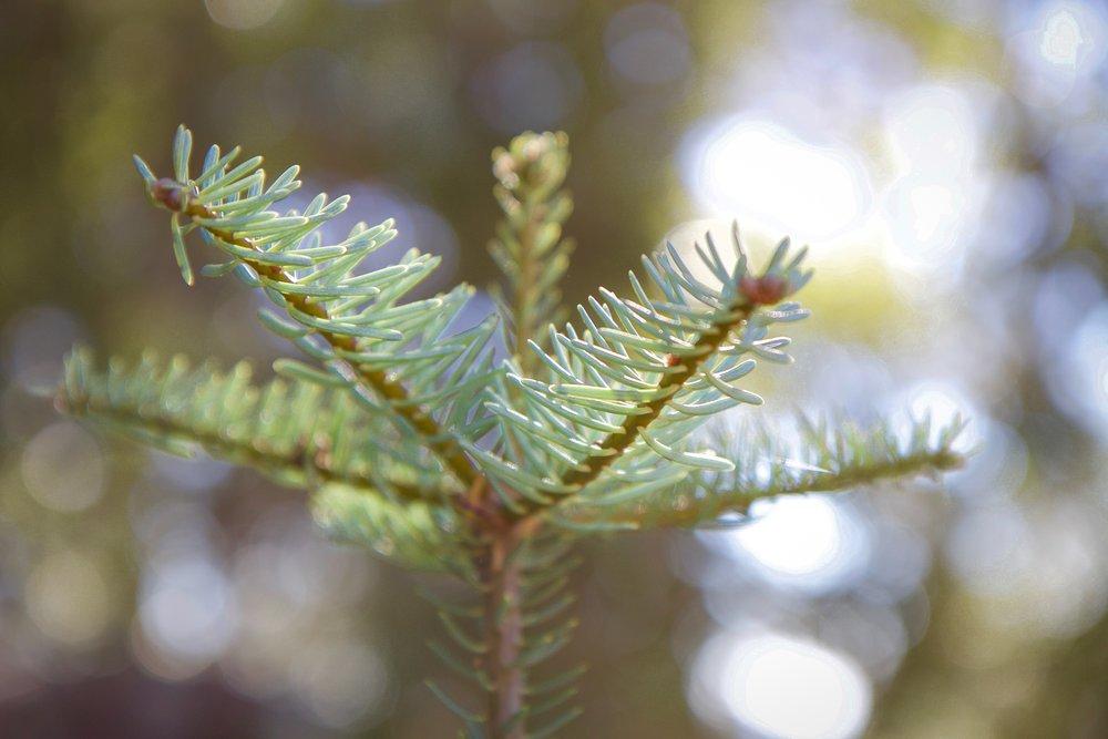 Grow - Holli Z Photography - 1.jpg