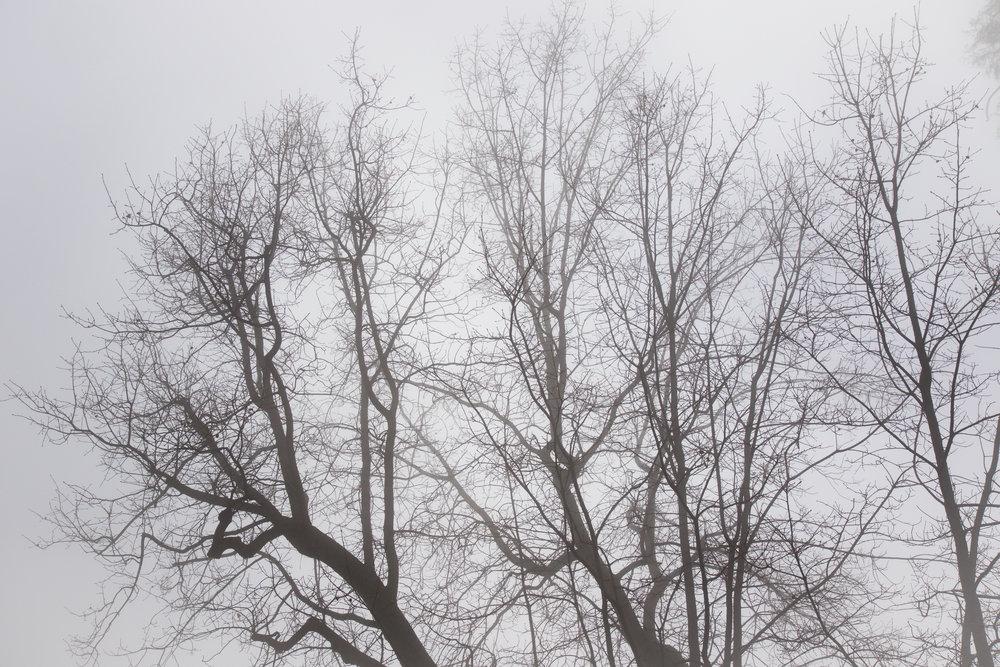 Monochrome - Holli Z Photography - 1.jpg