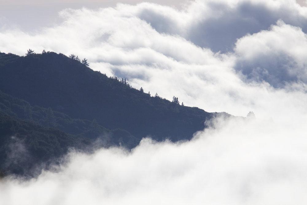 Mountain Mist - Holli Z Photography - 1.jpg
