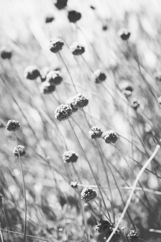 Dry - Holli Z Photography - 1.jpg