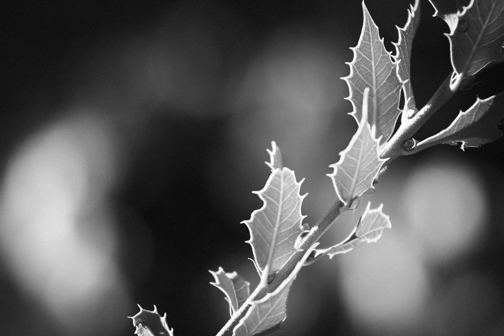 Outline - Holli Z Photography - 1.jpg