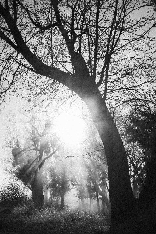 Shine Through - Holli Z Photography - 1.jpg