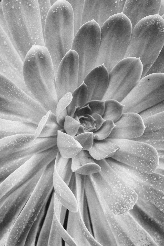 Succulent - Holli Z Photography - 1.jpg