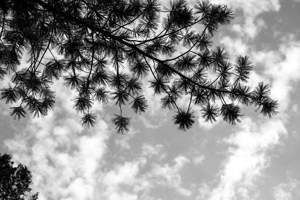 Across - Holli Z Photography - 1.jpg