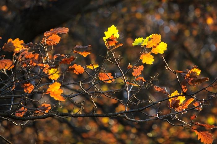 November+-+Holli+Z+Photography+-+1.jpg