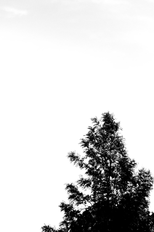 Blank Space stories - Holli Z Photoghraphy - 1.jpg