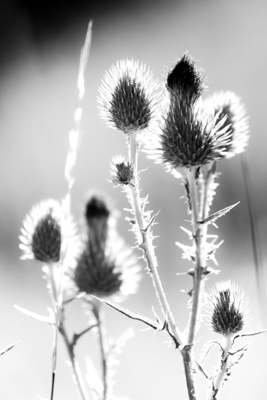 Firework Flower stories - Holli Z Photography - 1.jpg