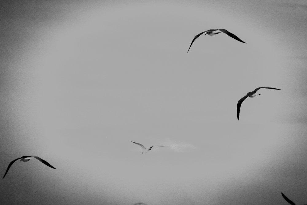 Into the Sky - Holli Z Photography - 1.jpg