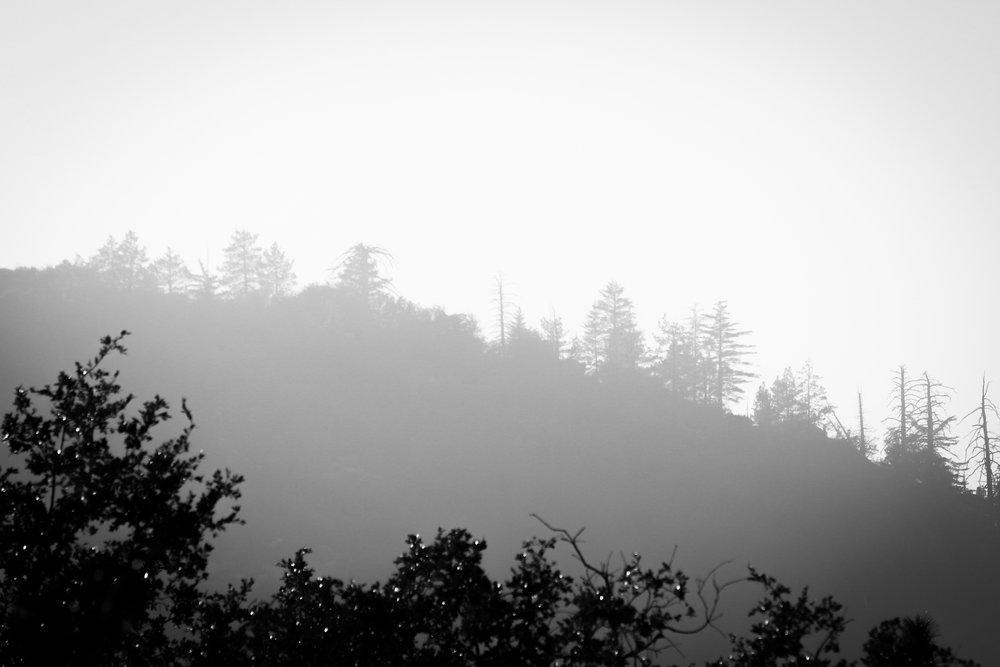 Ridge - Holli Z Photography - 1 (1).jpg
