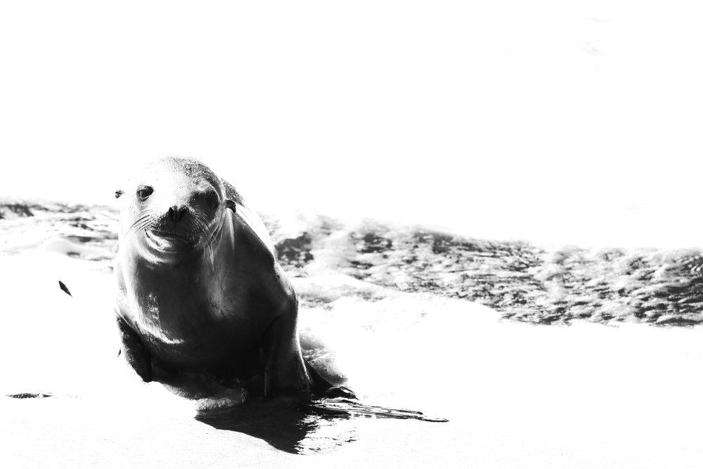 Sealed - Holli Z Photography - 1.jpg