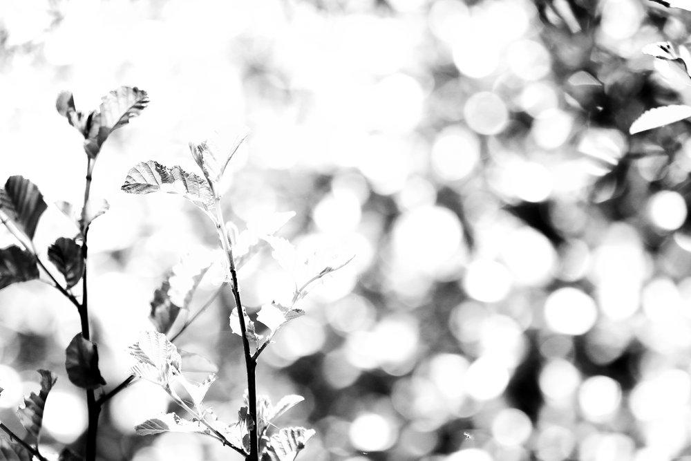 Sparkle - Holli Z Photography - 1.jpg