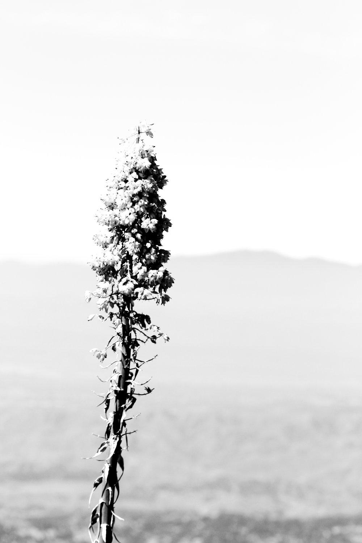 Summer - Holli Z Photography - 1.jpg