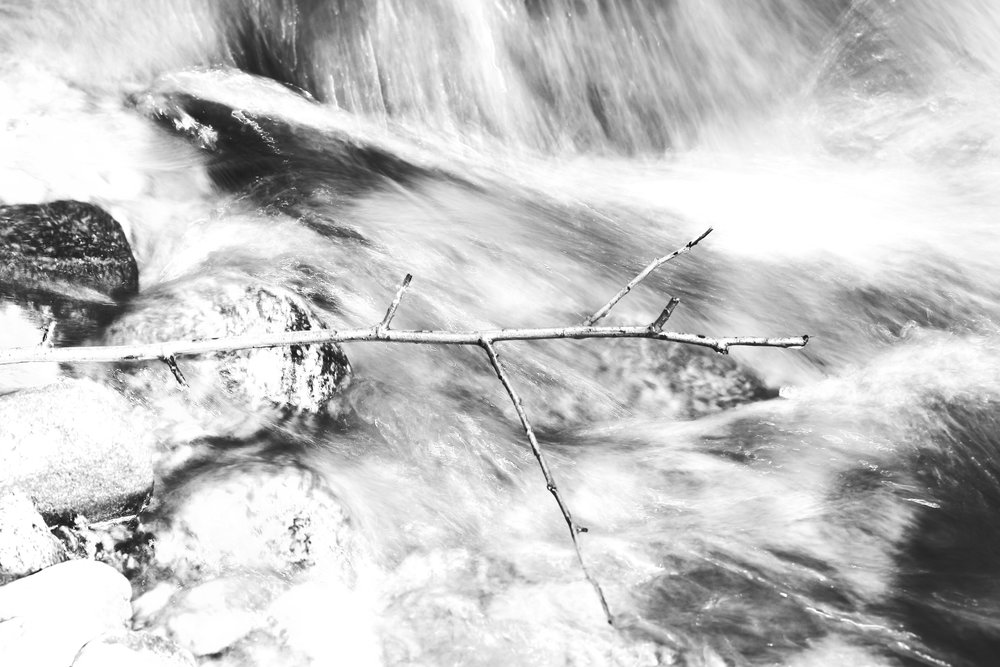 Twig - Holli Z Photography - 1.jpg