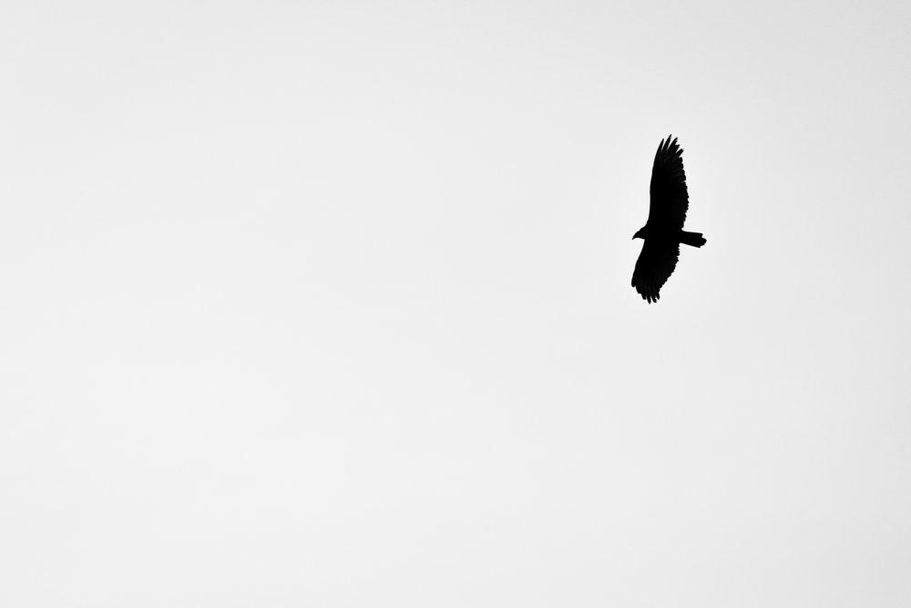 Wingtips - Holli Z Photography - 1.jpg