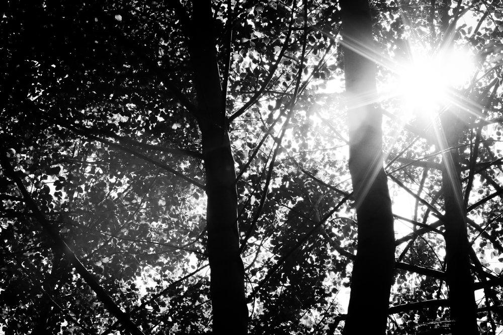 Filter - Holli Z Photography - 1.jpg