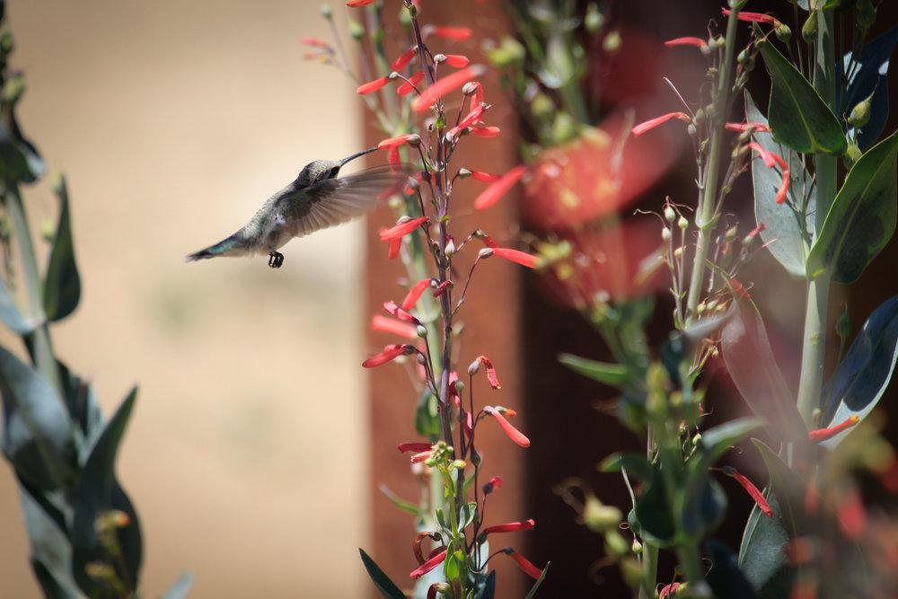 Nectar - Holli Z Photography - 1.jpg