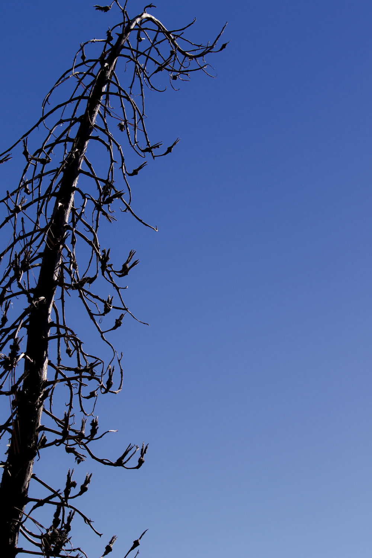 Blue - Holli Z Photography - 1.jpg