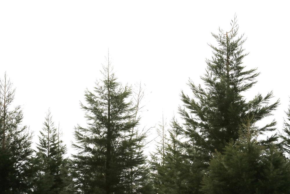 Treeline - Holli Z Photography - 1.jpg