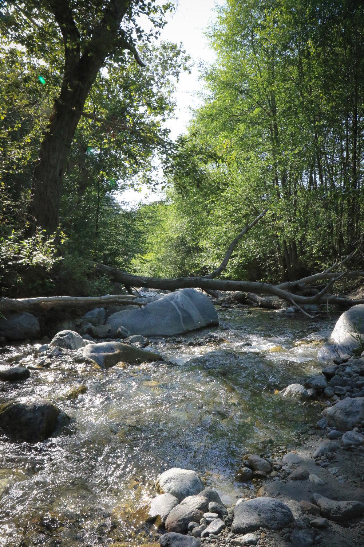 Creekside Posts - 2.jpg