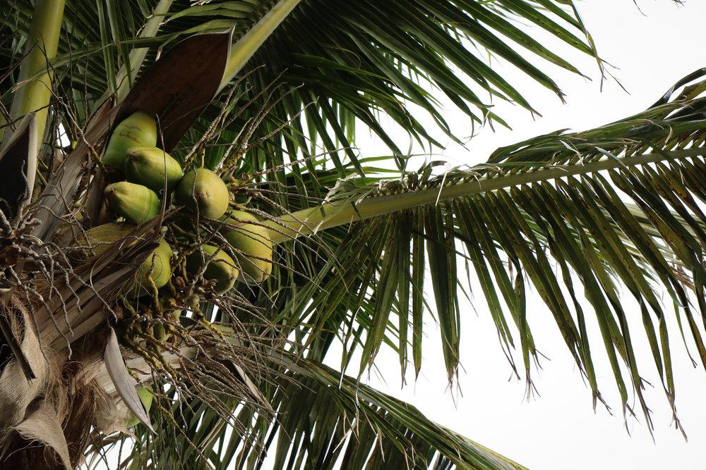 Coconuts - Holli Z Photography - 1.jpg