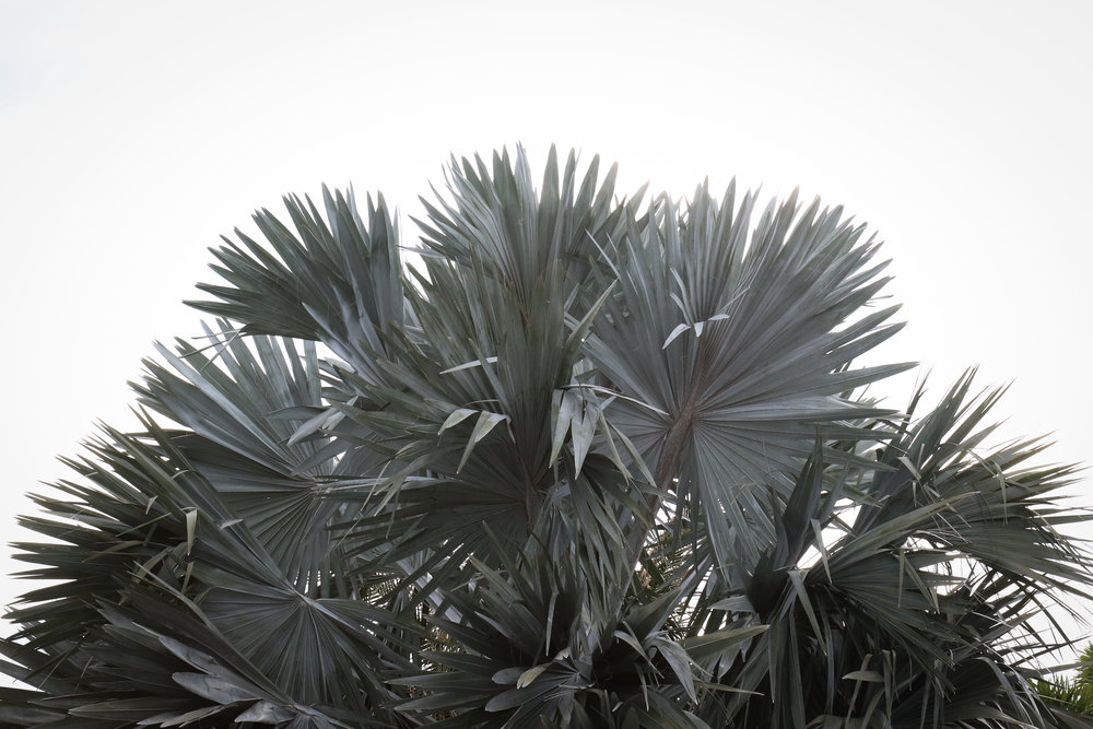 Palm - Holli Z Photography - 1.jpg