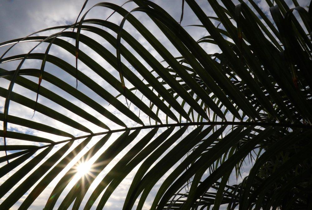Rays of Light - Holli Z Photography - 1.jpg