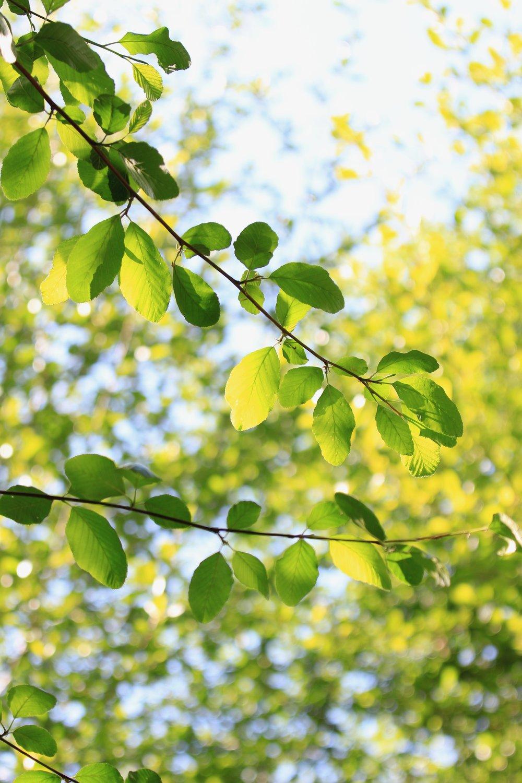 Creek Leaves - Holli Z Photography - 1.jpg