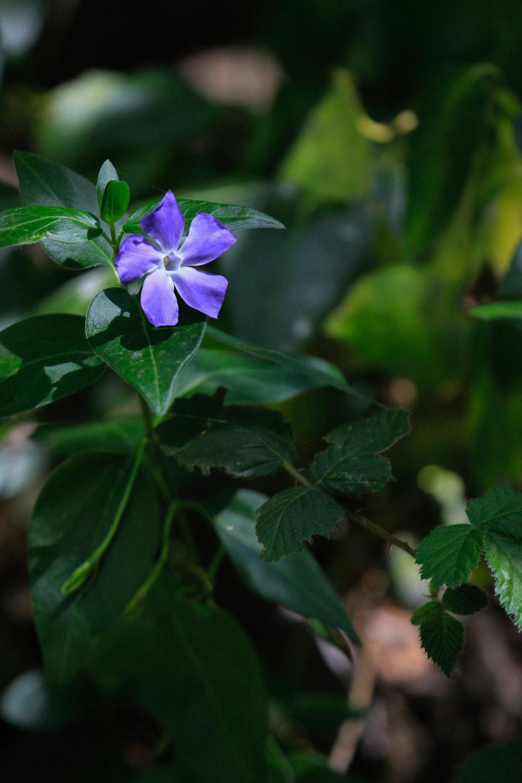 Pentagonal Purple - Holli Z Photography - 1.jpg