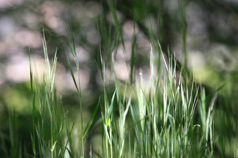 Tiny World - Holli Z Photography - 1.jpg