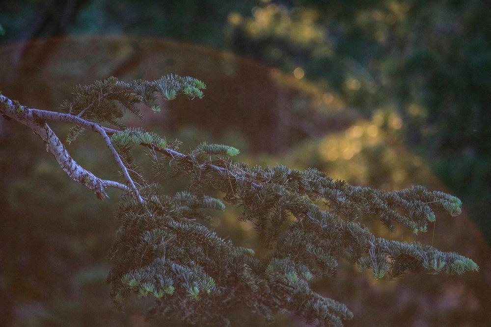 Rainbow  stories - Holli Z Photography - 5.jpg