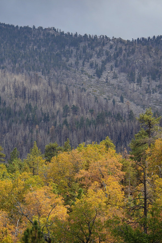 Natures Burn - Holli Z Photography - 1.jpg