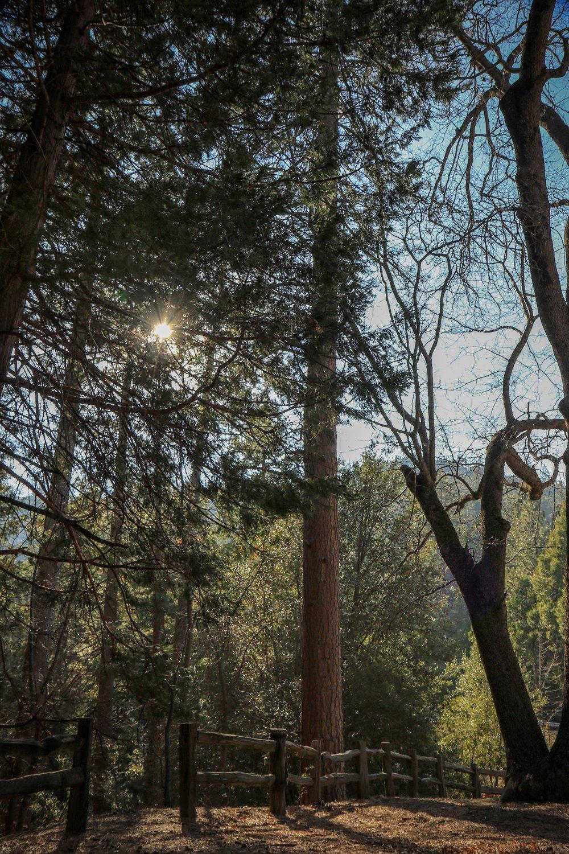 Beaten Path - Holli Z Photography - 1.jpg