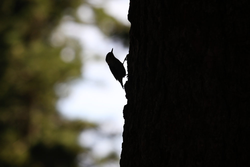 Silhouette Song - Holli Z Photography - 1.jpg