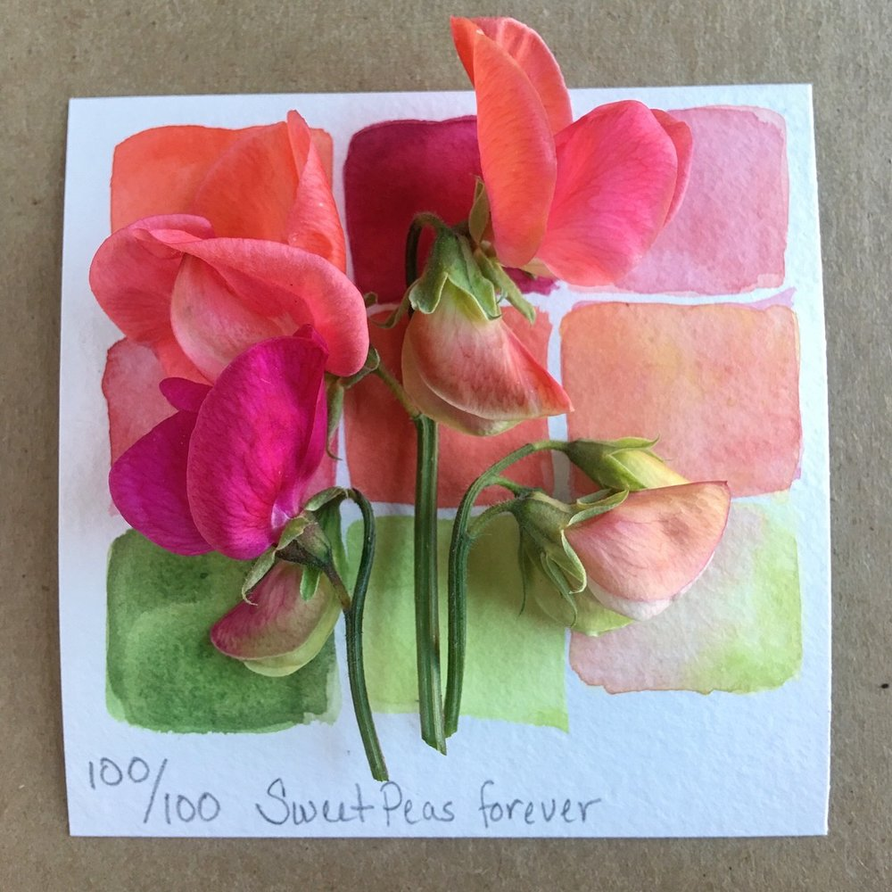 100 days - July 11, 2018 There never was any question that today would be a celebration of sweet peas. These delicate, fragrant, blooms are a powerful family totem.