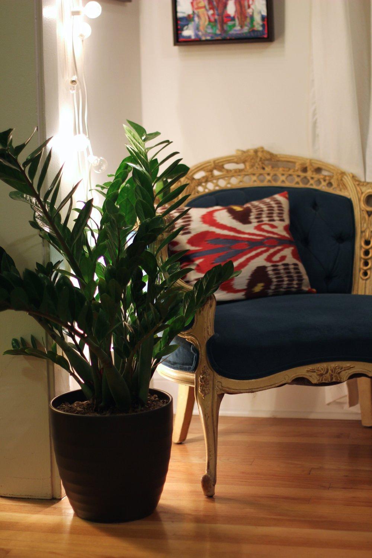 My ZZ plant!