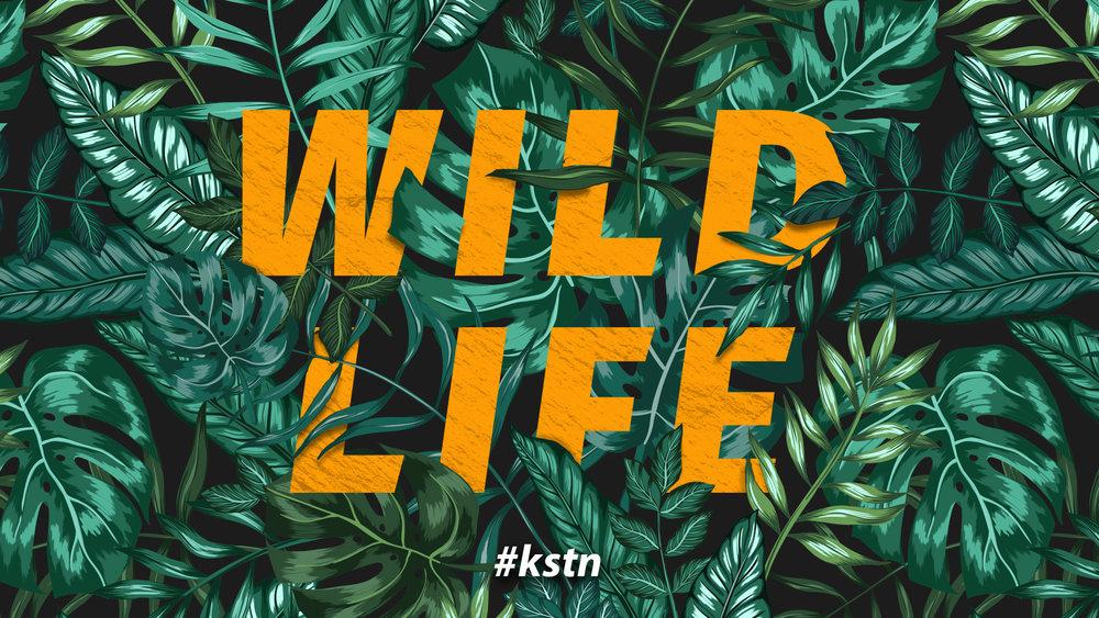 WildLife_Screen_FINAL_LOGO.jpg