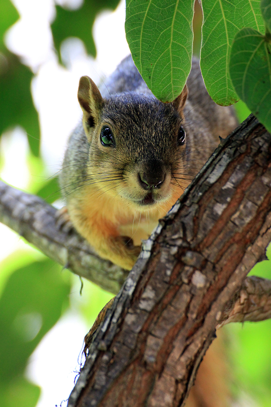 Squirrel-in-Tree.jpg