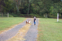Noah and Tuffy on our way out of the Easton driveway for a walk after the rain.