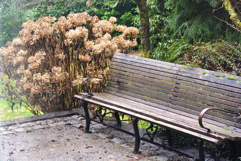 A bench and some dormant flowers on one edge of the patio on a grey, rainy day.