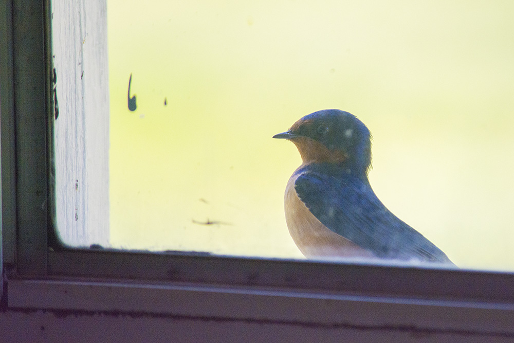 This little guy came and sat on the windowsill long enough for me to catch a photo. My battery was one shot away from death, but one shot was all I needed. :-)