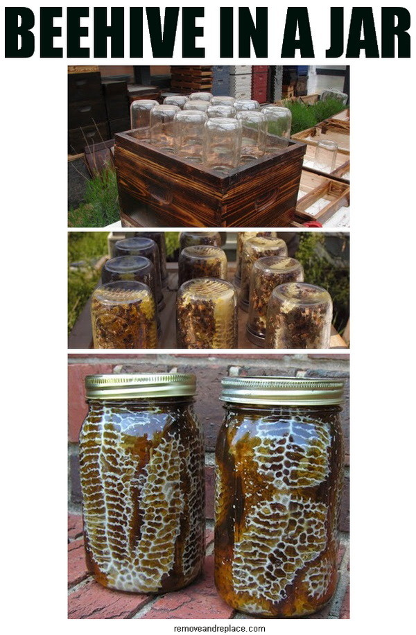 """Sweet"" Idea from removeandreplace.com: DIY jar beehive."