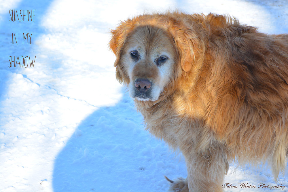 My faithful walking buddy. Sunshine and I are both glad for spring!