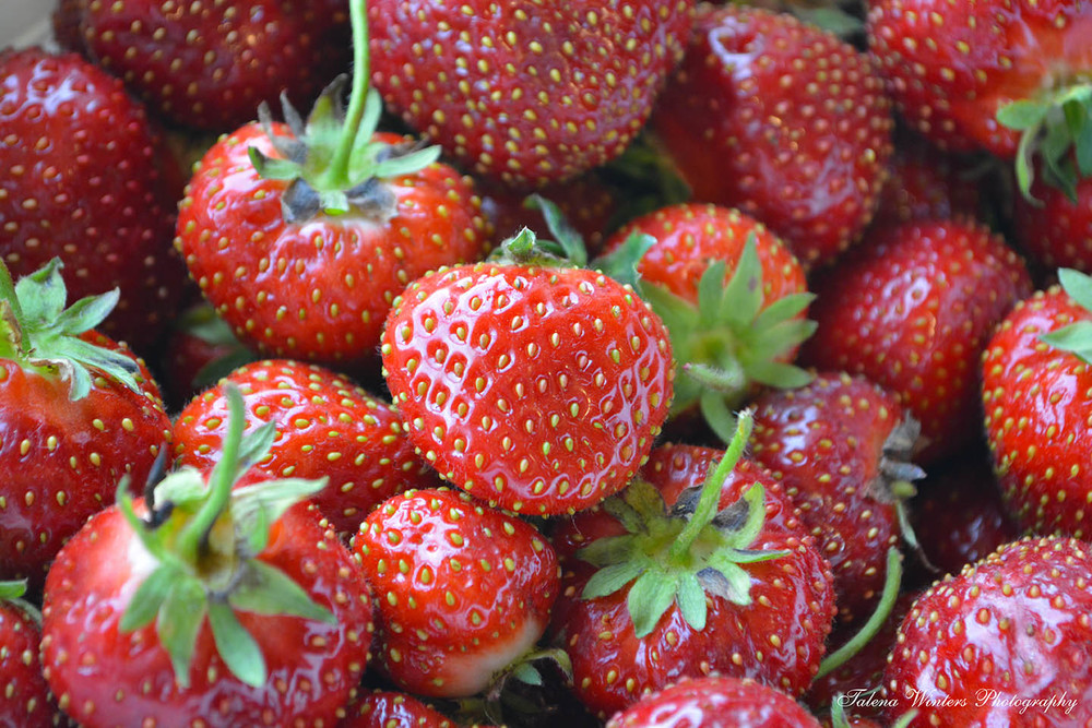 Fresh-from-the-field strawberries