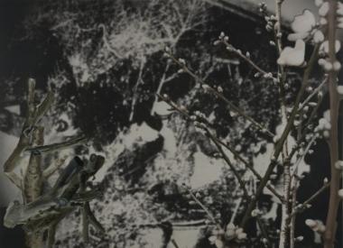 John Young Flower Market (Nanjing 1936) #2, 2010, digital print and oil on Belgian linen, 240 x 331 cm