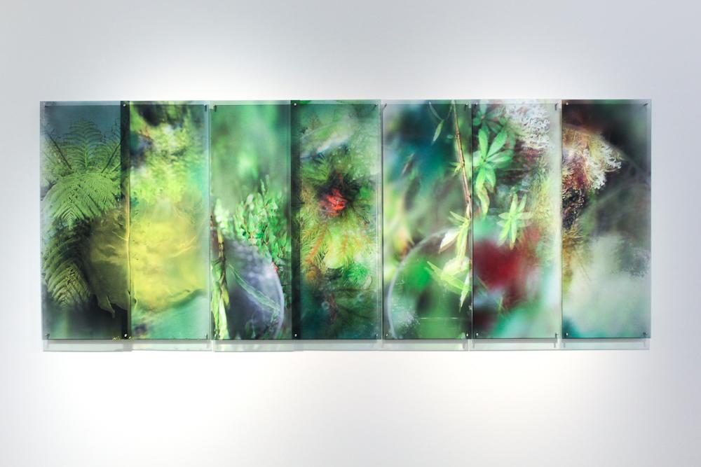 Janet Laurence,What a Plant Knows II (the Tarkine, Tasmania),2012, duraclear, acrylic, dibond, mirror, oil glaze, 122 x 313 cm.