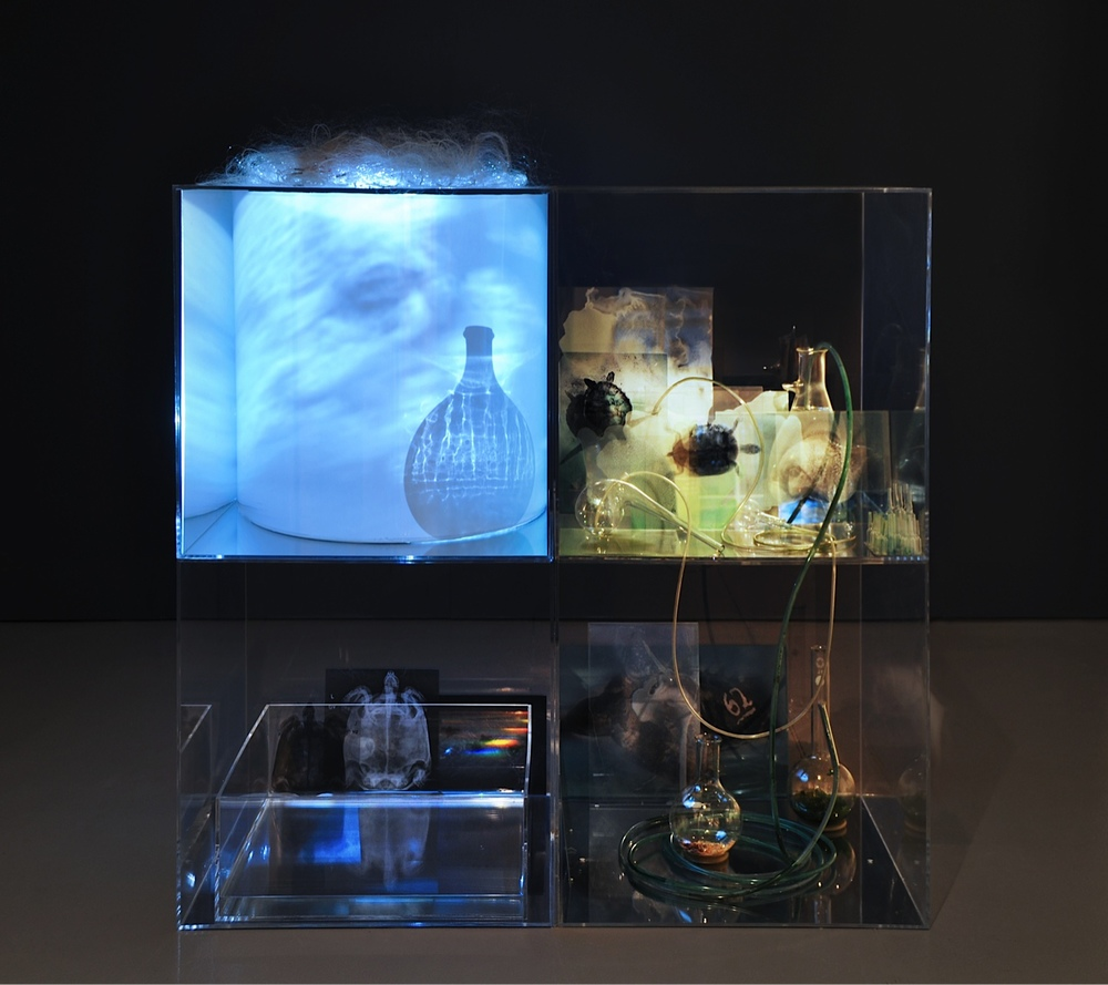 Janet Laurence, Stranded, 2012, installation view.