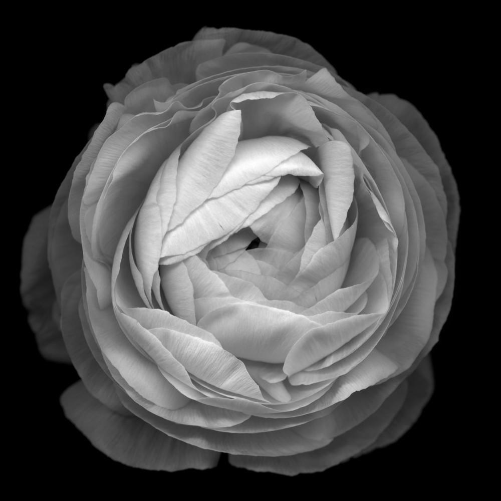 HUANG XU     Flower No. 3  2011 Photograph 120 x 120 cm