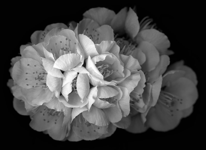 HUANG XU     Flower No. 5  2011 Giclee Print 100 X 122 cm
