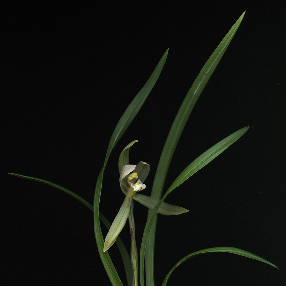 HUANG XU     Flower No.2  2008 Type C Photograph 120 x 120 cm