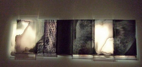 JANET LAURENCE     Carbon Veil  2009 Duraclear, acrylic, aluminium, oil, pigment    350 x 100 cm